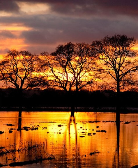 sunset_waterlogged_field_3[1]
